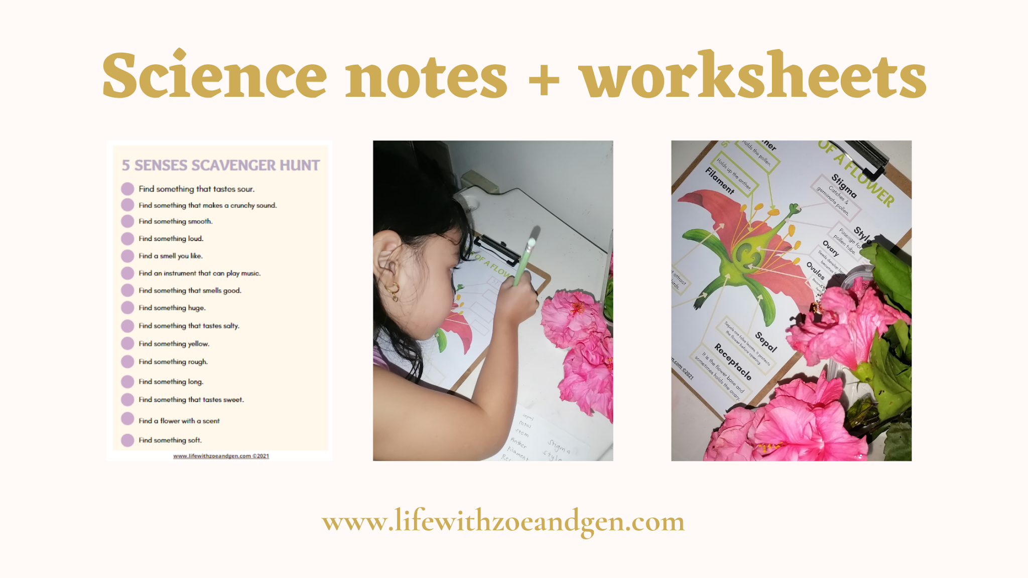 Free download l Science notes and worksheets for Grade 1 l download and get your copy.l Parts of a flower l Life with ZG