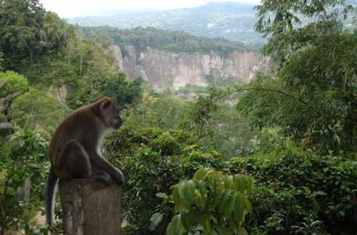 Hutan Ngarai Sianok