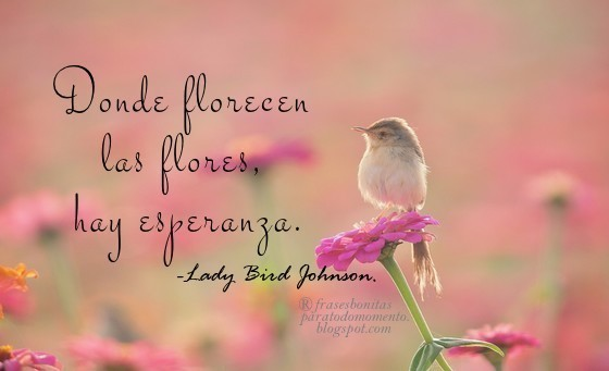 Frases Bonitas Para Todo Momento Donde Florecen Las