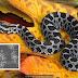 Populações de cobras ameaçadas por um fungo!