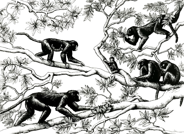 Fossil suggests apes, old world monkeys moved in opposite directions from shared ancestor