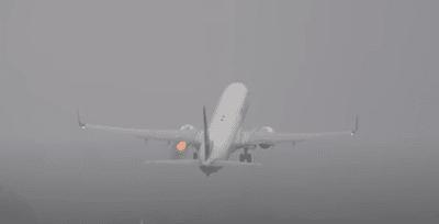 takeoff bird strike