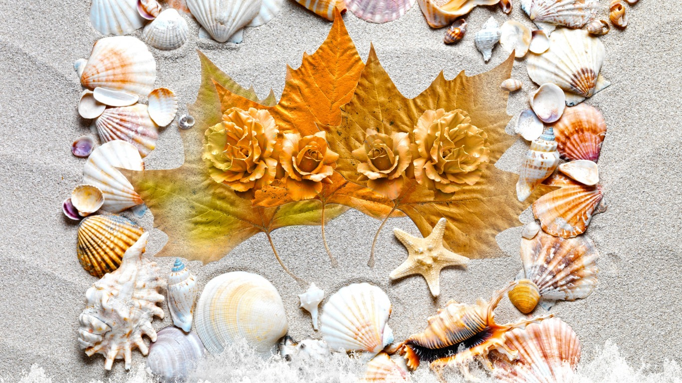 Cute 3d Flower Wallpaper Seashells Wallpaper Collection Most Beautiful Places In