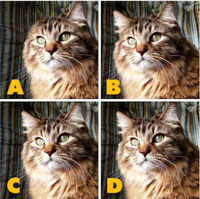 Which image is different? image 14