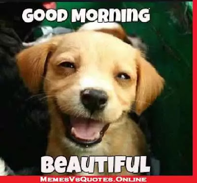 Good Morning  beautiful memes for her, dog face