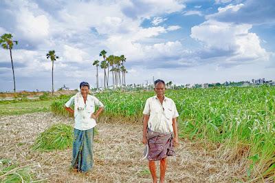 India's agricultural exports up 23.24 percent during Covid-19 epidemic कोविड-19 महामारी के दौरान भारत के कृषि निर्यात में 23.24 प्रतिशत की बढ़ोतरी