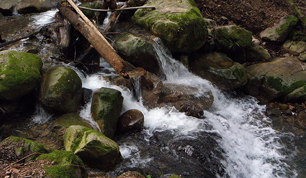 Mossy rocks and logs with water in stream bed