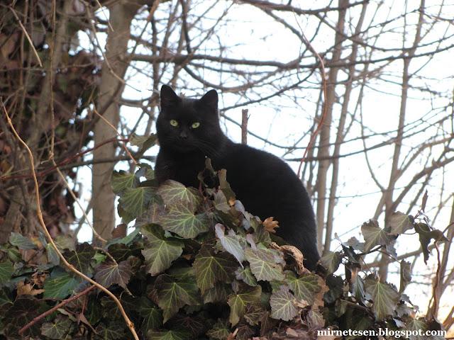 Котоподборка из Черногории - Цетине, кот на заборе