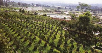 Di Kebun Wisata Pasir Mukti, Anda bisa menikmati kebun buah, taman anggrek, sawah, sungai, kolam pancing dan kolam lumpur
