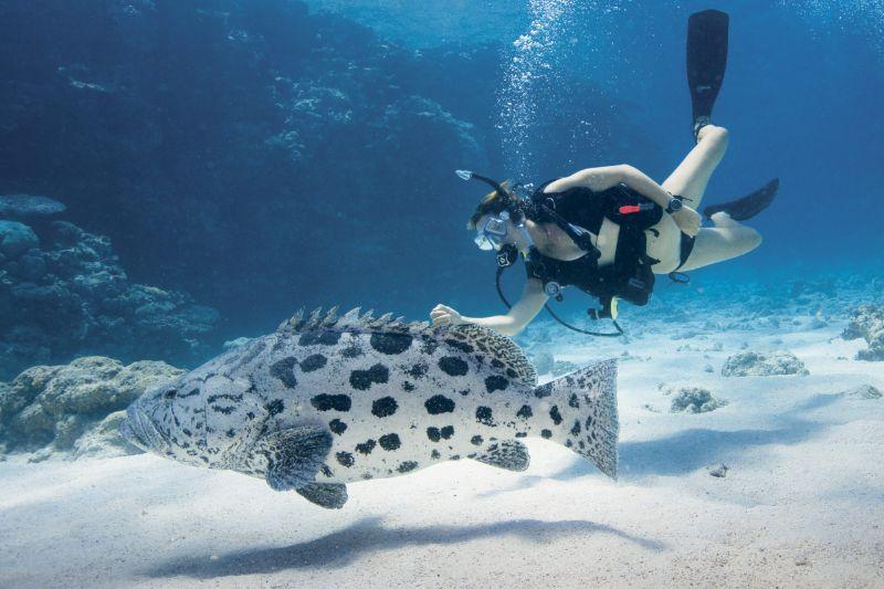 Diving in Lizard Island - Great Barrier Reef
