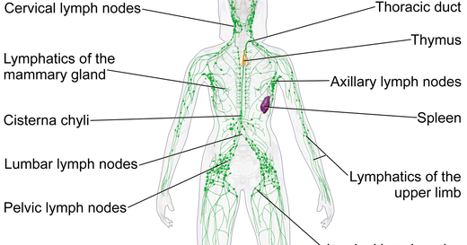 lymph system diagram how does the lymphatic system work