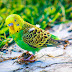 The picture of a small parrot is very beautiful
