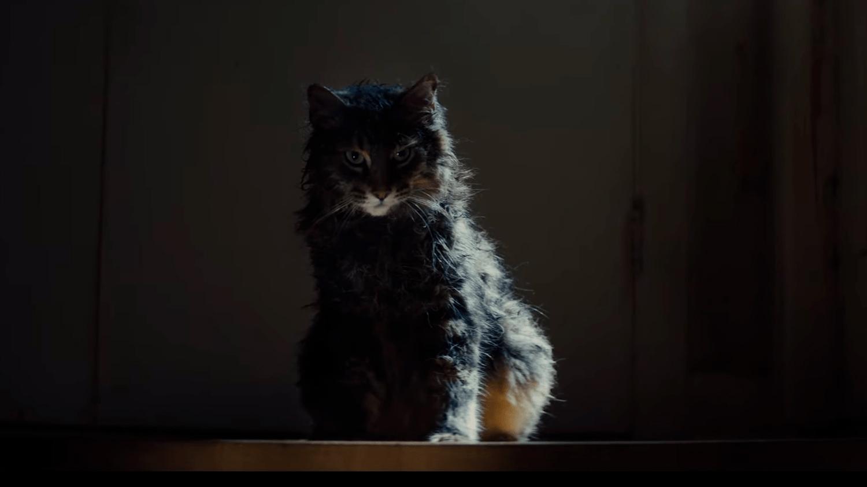 cementerio de animales 2019 - El gato