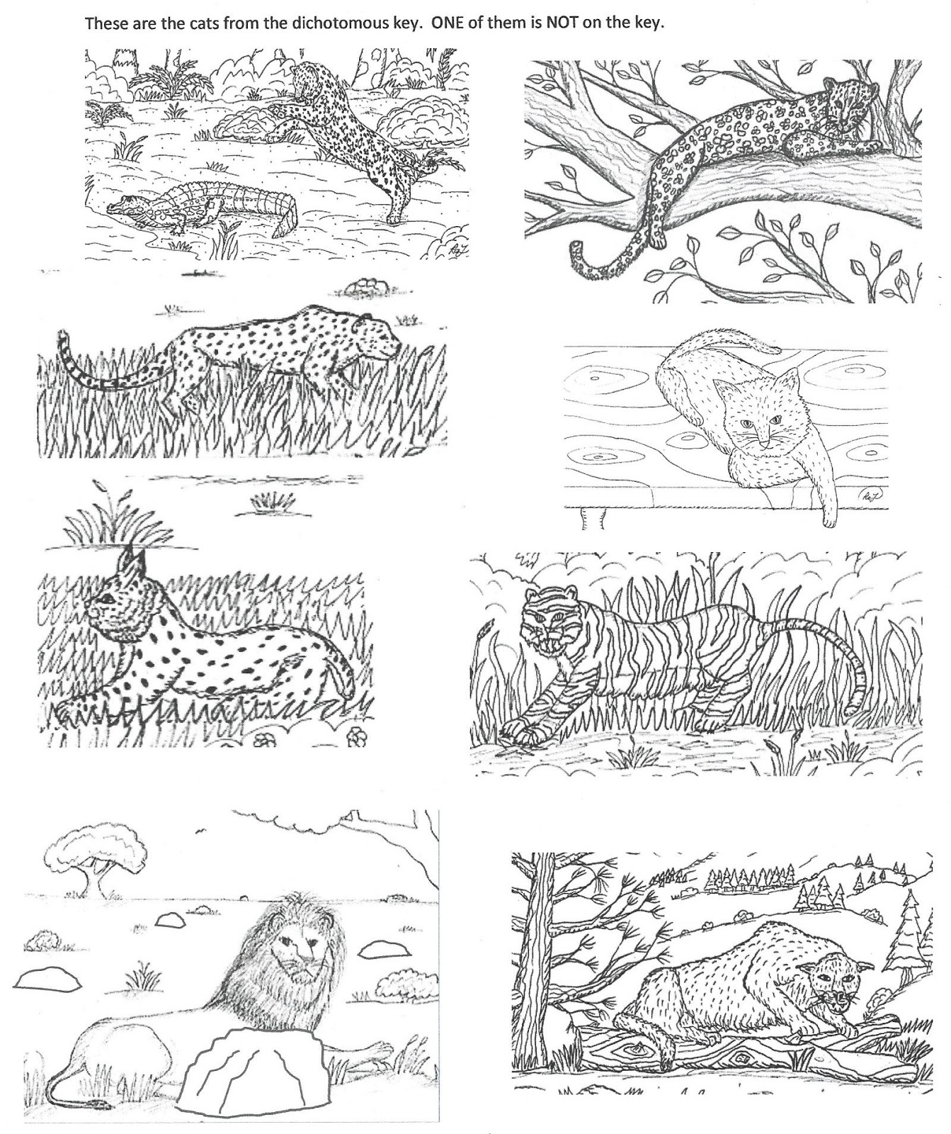 Robin S Great Coloring Pages Dichotomous Key For Some