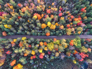 A view looking down on a road winding through a forest of multi-colored trees.