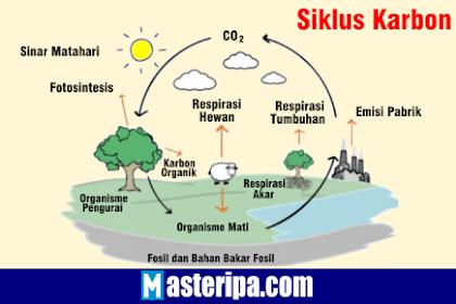 Pengertian Siklus Karbon dan Proses Siklus Karbon