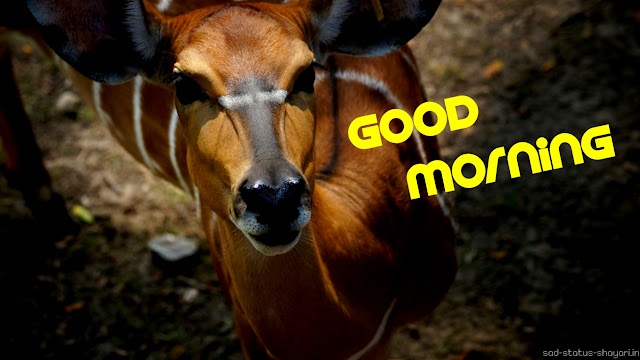 Good morning animal image