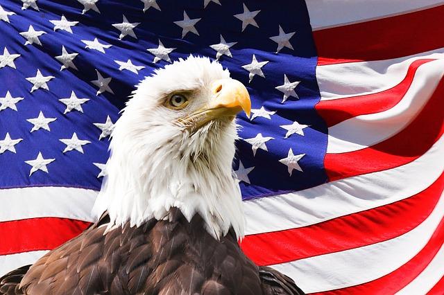 Bald eagle America's national emblem.