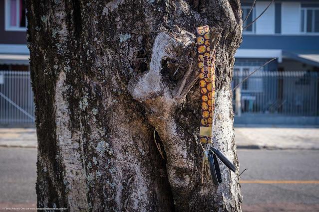 Molho de chaves pendurado no tronco de uma árvore
