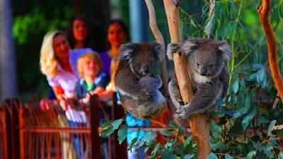 Melbourne Zoo tempat menarik di Melbourne