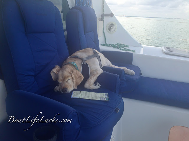 Boat dog taking a nap on a Lagoon 380 sail catamaran