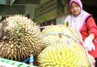 Kampung Durian di Jombang Jawa Timur