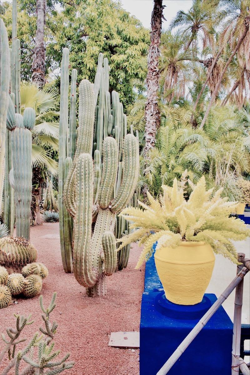marrakesz ogród majorelle, Marrakesz ogród ysl Laurent Jardin majorelle historia