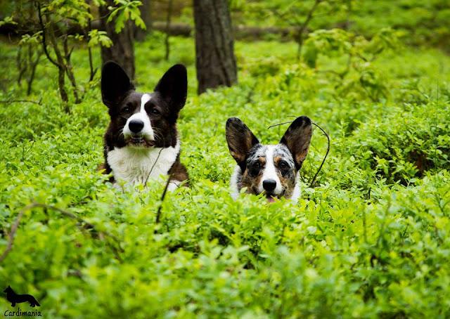 podróże z psem, wakacje z psem, w góry z psem