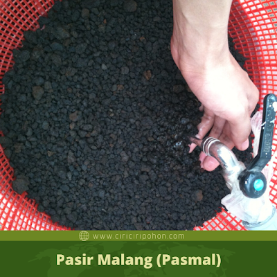 Pasir Malang (Pasmal)
