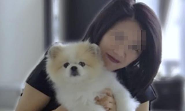 Muere el primer perro contagiado con coronavirus