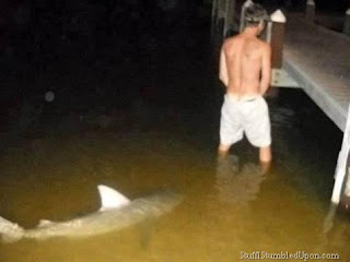 Keeping With The Shark Week I Give You Photos Of Sharks Photobombing