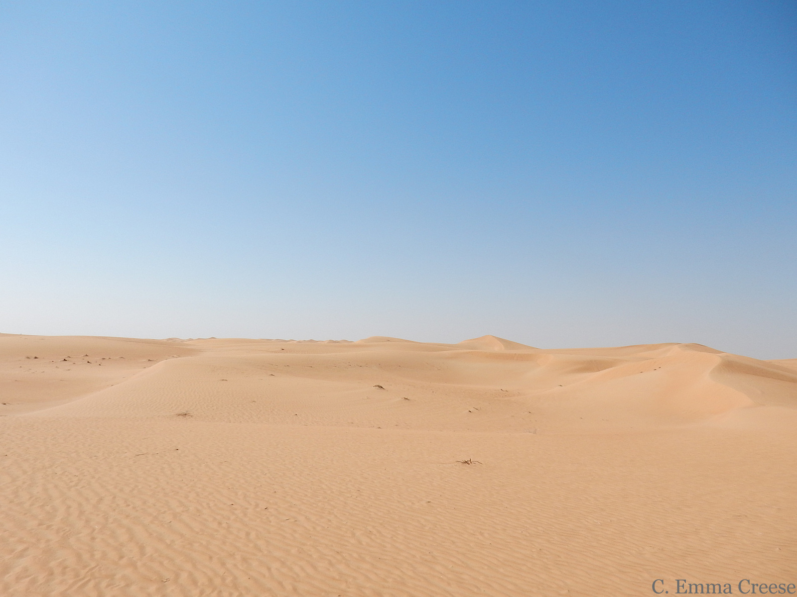 What to do in Dubai desert safari