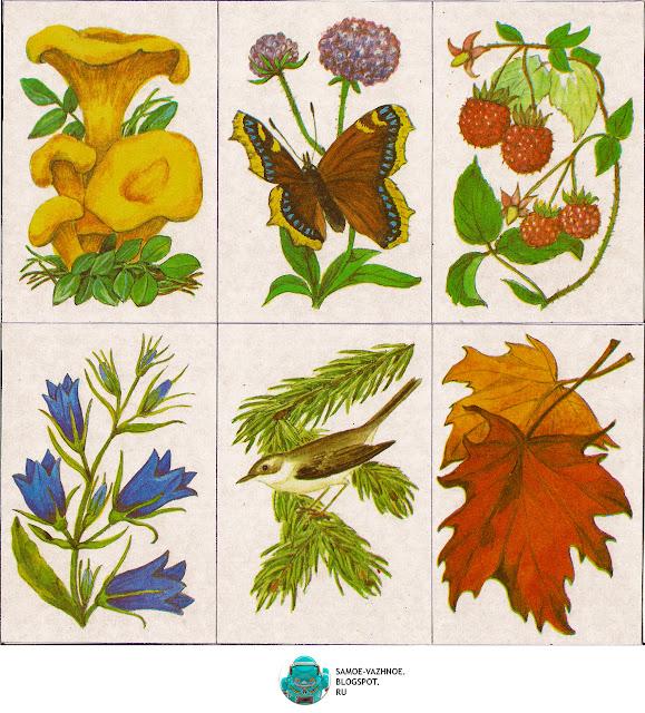 Старые советские настольные игры. Игра Шесть картинок Г. Крюкова 1986, Игра природа, растения, лес, грибы, птицы, цветы, ягоды  СССР.