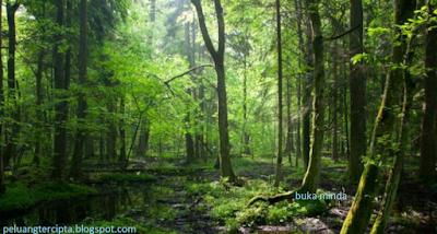 petua,masuk,hutan,petua dalam hutan,petua masuk hutan