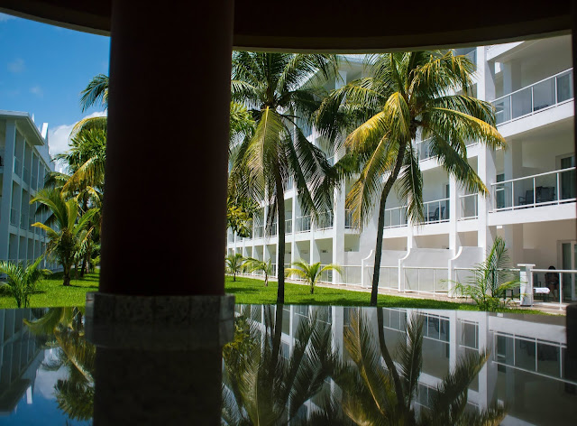 Table View of trees and hotel walls in RIU Montego bay