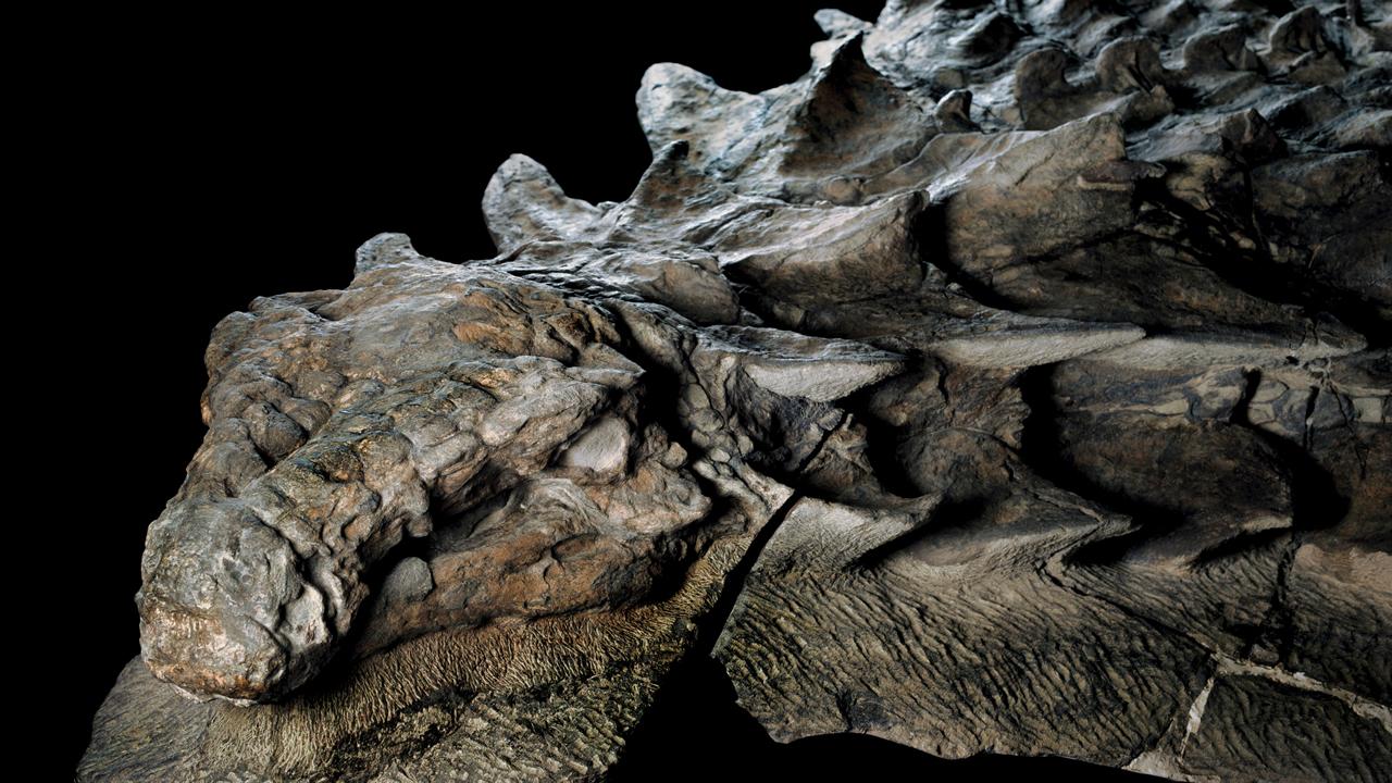 ¿Cómo es posible que el fósil de un dinosaurio de 100 millones de años aun conserve su piel?