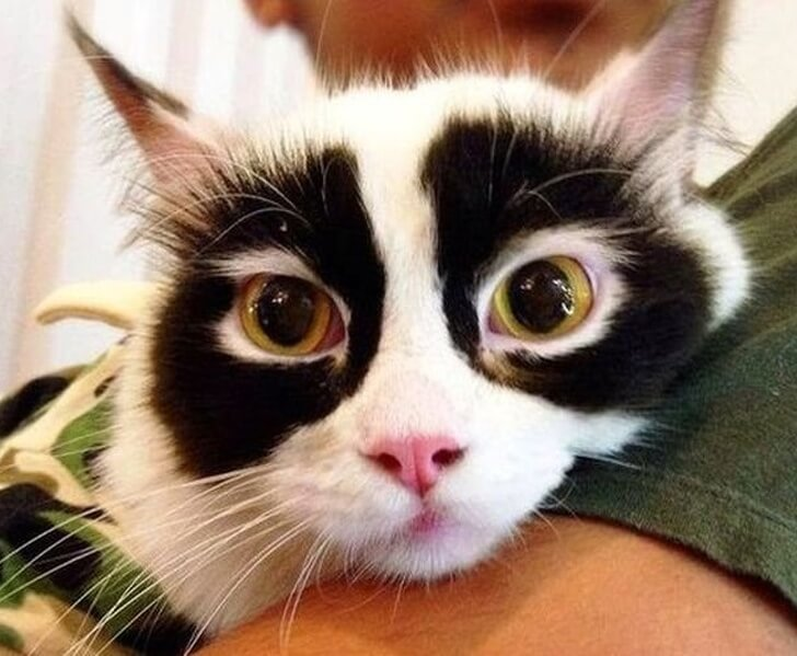 30 Adorable Pictures Of Cats Whose Fur Markings Make A Statement