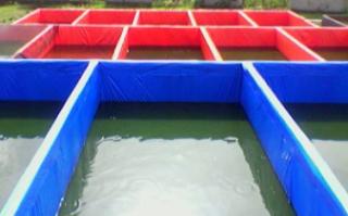 menyiapkan kolam ikan lele