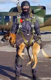 cães paraquedistas