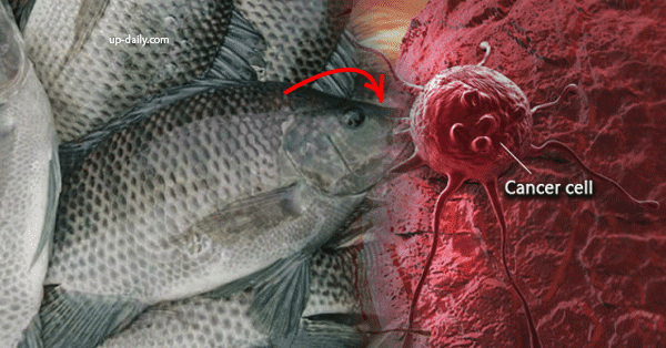 BEWARE: You will NEVER eat Tilapia again after reading this!