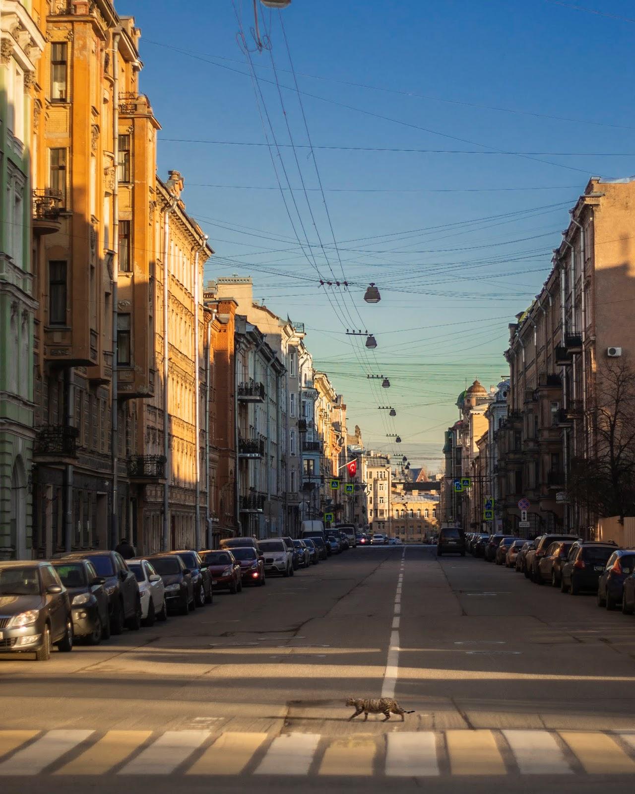 кот пешеход весна Питер СПб улицы