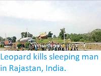 https://sciencythoughts.blogspot.com/2019/07/leopard-kills-sleeping-man-in-rajastan.html