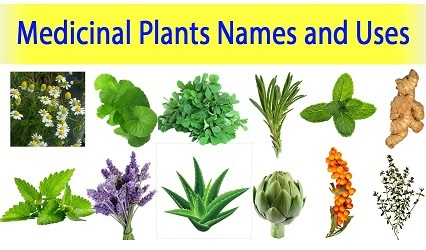 Investigatory Project on Medicinal Plants