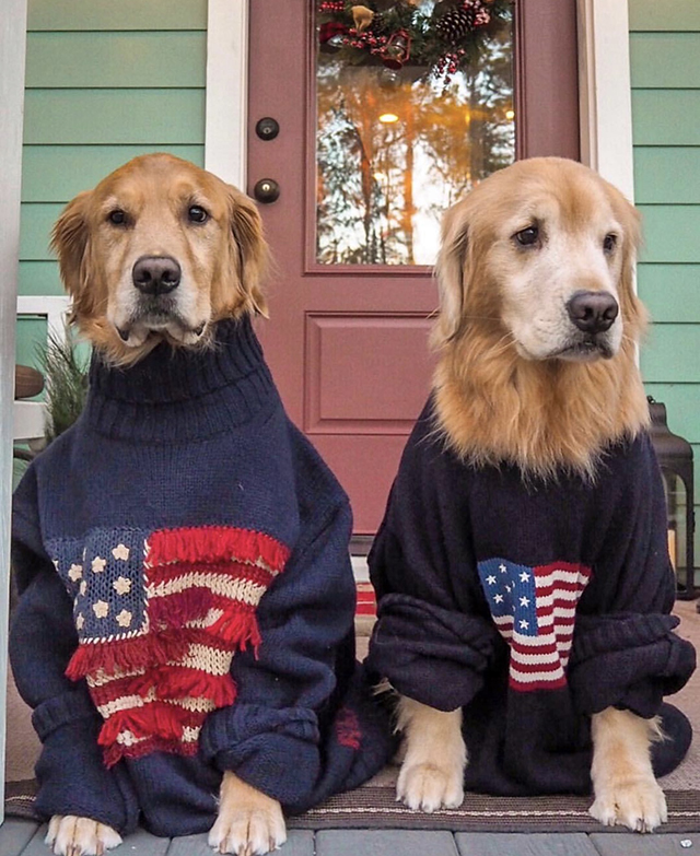 Golden Retrievers American Flat Sweaters