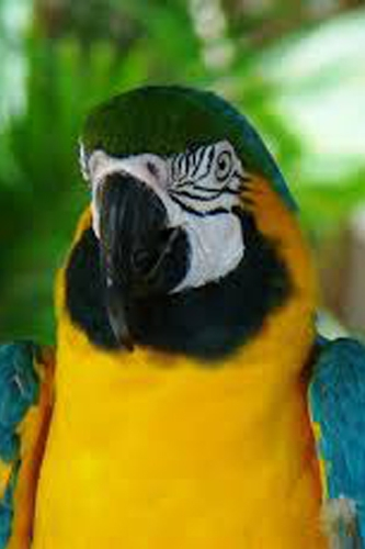 17 Different Types of Parrots - Different Species of Parrots