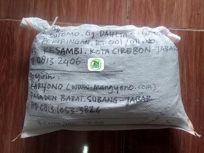 Benih Padi Pesanan   DWI HARTONO Cirebon, Jabar.   (Setelah di Packing).