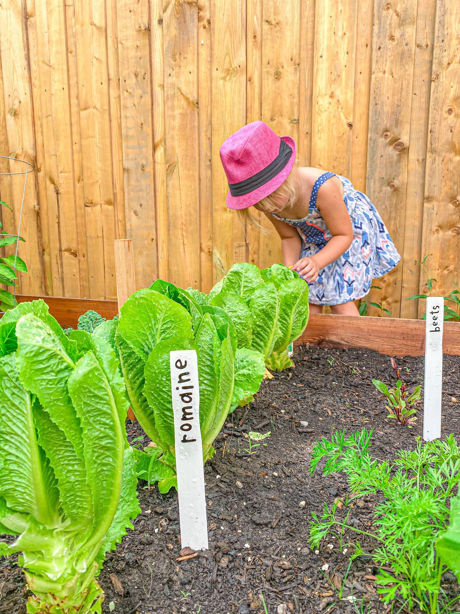 girl in vegetable garden