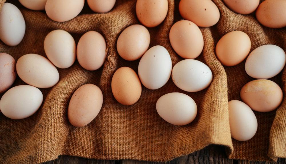 Das Leben nach dem Ei
