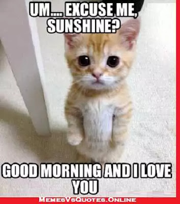 Good Morning  beautiful memes for her, Excuse me sunshine, cat