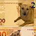 Deputado lança abaixo-assinado para vira-lata caramelo estampar nota de R$ 200